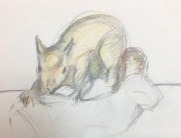 watercolour artwork of squirrel still life from ruskin 200 drawing weekend