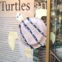 Myrtle the turtle at the Museum of Natural History