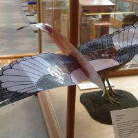 Red Kite mobile at the Museum of Natural History